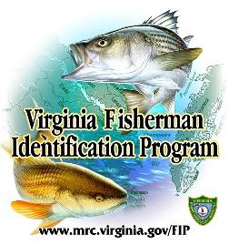Virginia fisherman identification program for Virginia saltwater fishing report