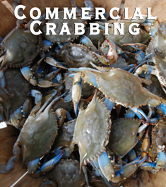 Commercial Crabbing Regulations